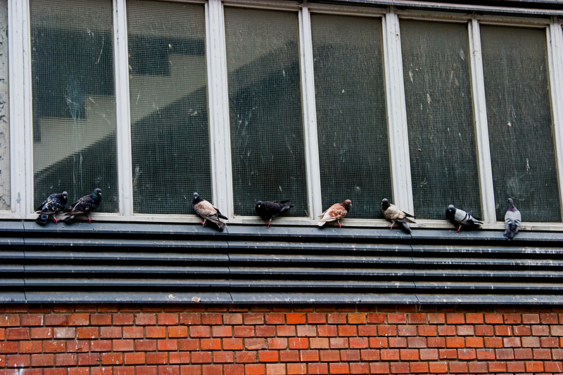 <center>Pigeons   <br><br>Budapest, Hungary   <br><br>These flying rats are in just about every major city in the world.    </center>