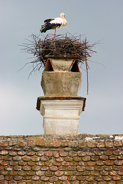 <center>Stork   <br><br>Zwettl, Austria   <br><br>For a moment I thought I was back in Morocco. This stork built a large next atop one of the chimneys.    </center>