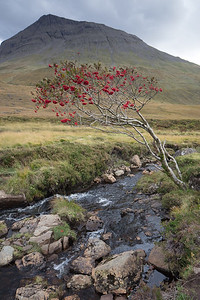 The Fairy pools, Glen britten, Isle of Skye marked by green grass, and red berries on the mountain ash midst the rocky terrain