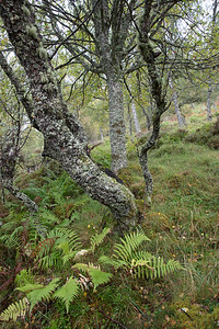 The Cairngorms feature a large variety of twisted beech forest deep with ferns and mushrooms