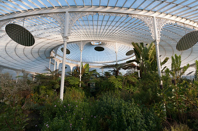 Inside the Glasgow Botanic Gardens in Glasgow, Scotland