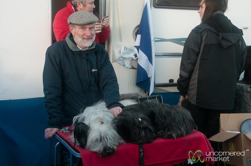 Dogs Take a Rest at Dogmanay - Edinburgh, Scotland