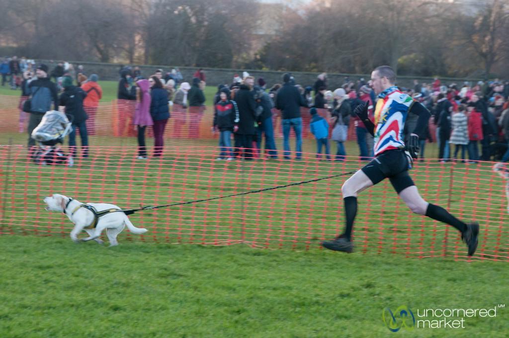 Beagle Leads His Owner at Dogmanay - Edinburgh, Scotland