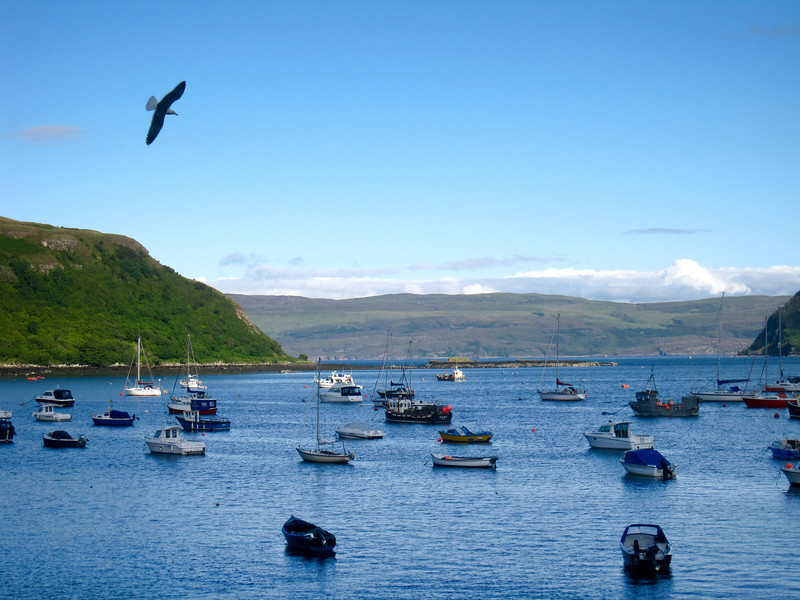 eagle soaring over Portree Harbor