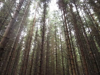 Forrest around Fort Augustus
