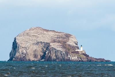 Gannets atop Bass Rock