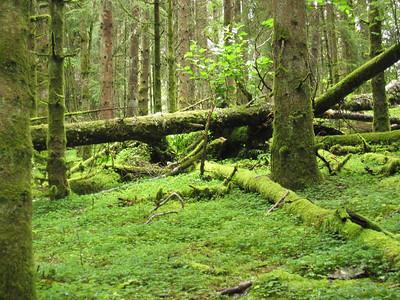 Lush green forrest growth