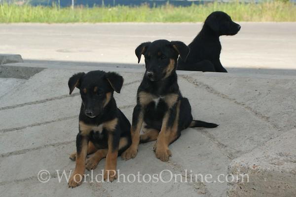 Viminacium - Puppies