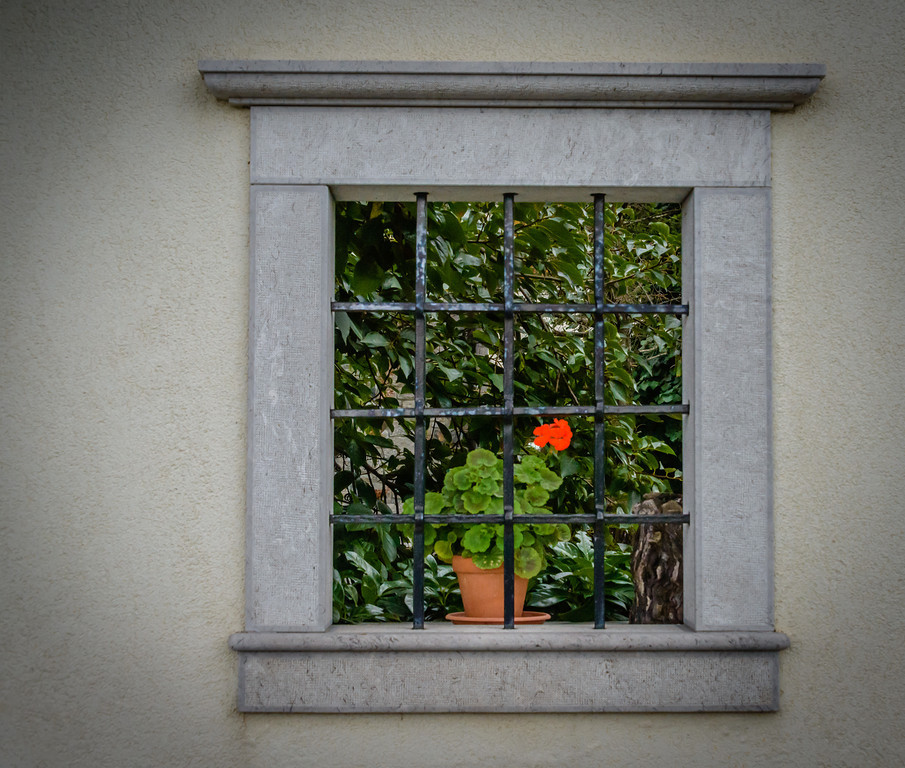 Vineyard Window