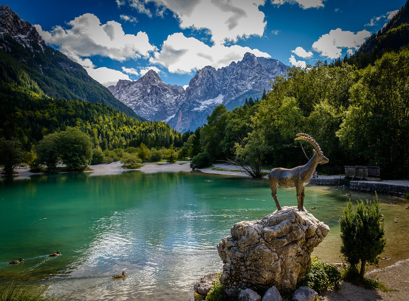 Goat at Lake Jasna Near Julian Alps