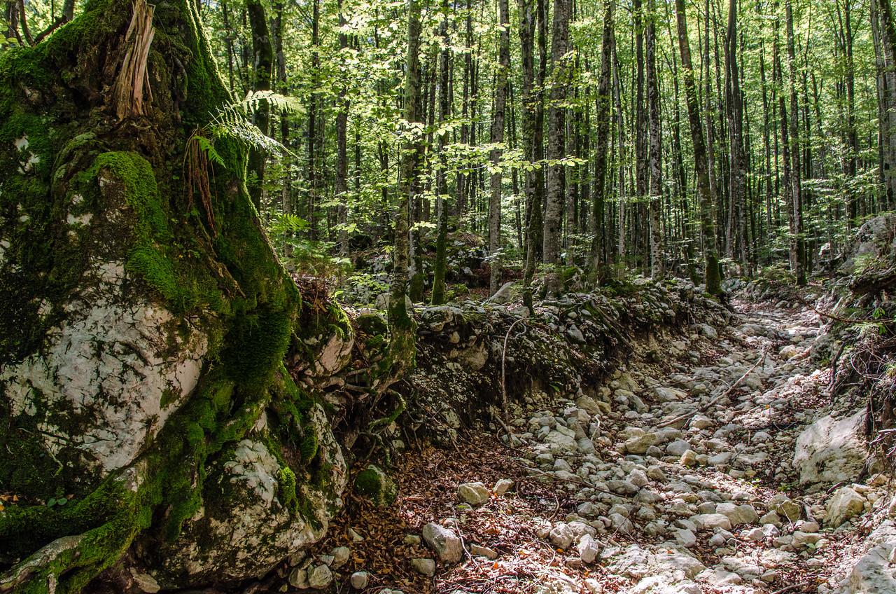 Dry creek, on the way to Savica Waterfall.