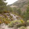Sp 4196 tussen Cumbres Verdes en Cerro Trevenque