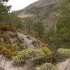 Sp 4195 tussen Cumbres Verdes en Cerro Trevenque