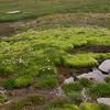 Sn 1827 moeras langs Laguna de Aguas Verdes