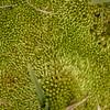 Sn 1828 mos in Laguna de Aguas Verdes