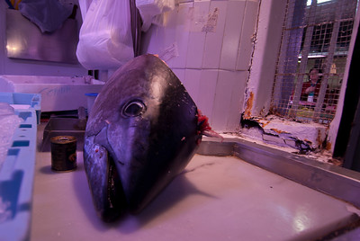 Cut fish head in Alicante, Spain
