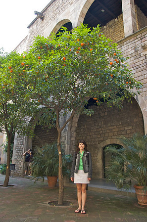 The courtyard of Museu Frederic Mares (Catalan sculptor) is known for its orange trees.