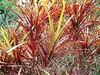 Tenerife, Puerto De La Cruz - Botanical Garden - Flowers 1