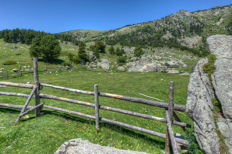 A Pyrenees Meadow in the Cerdanya Region of Spain