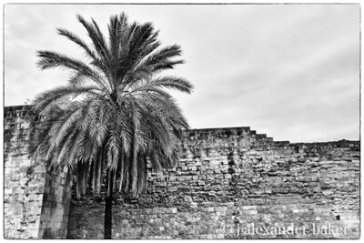 Wall and Palm, Cordoba Spain