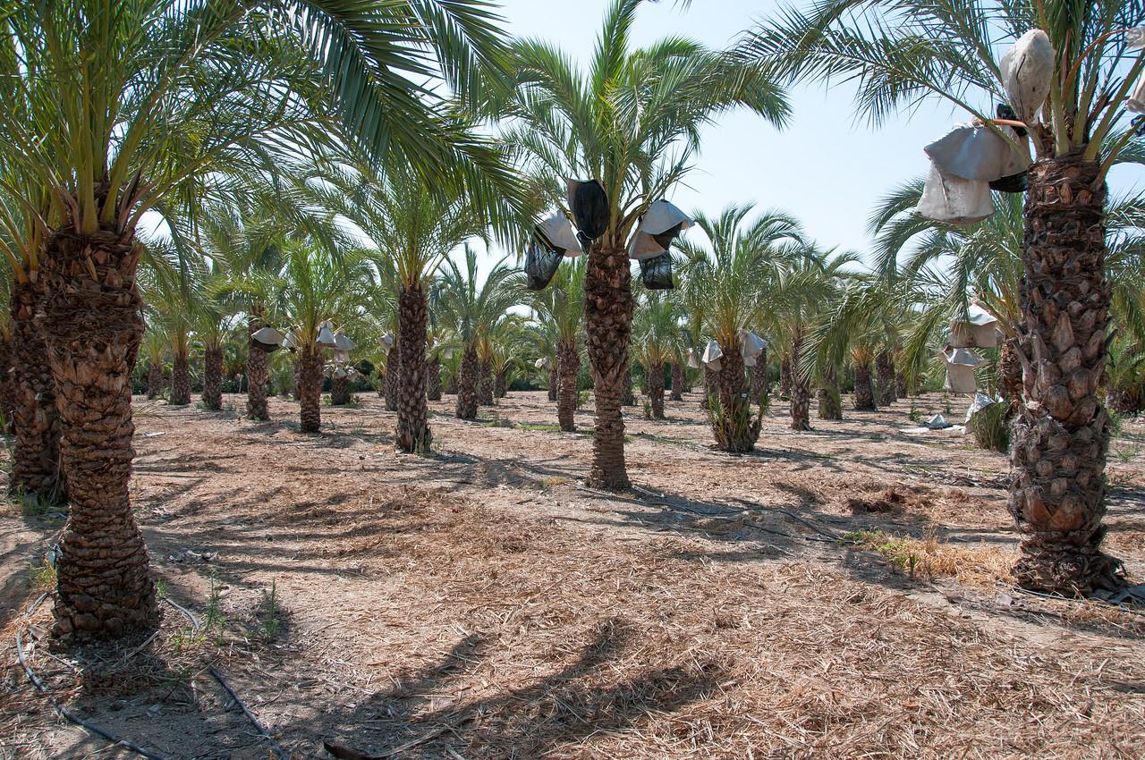 Inside Palmeral of Elche in Alicante, Spain