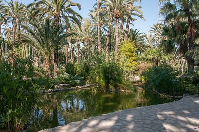 Inside the palm forest of the Palmeral of Elche, Spain