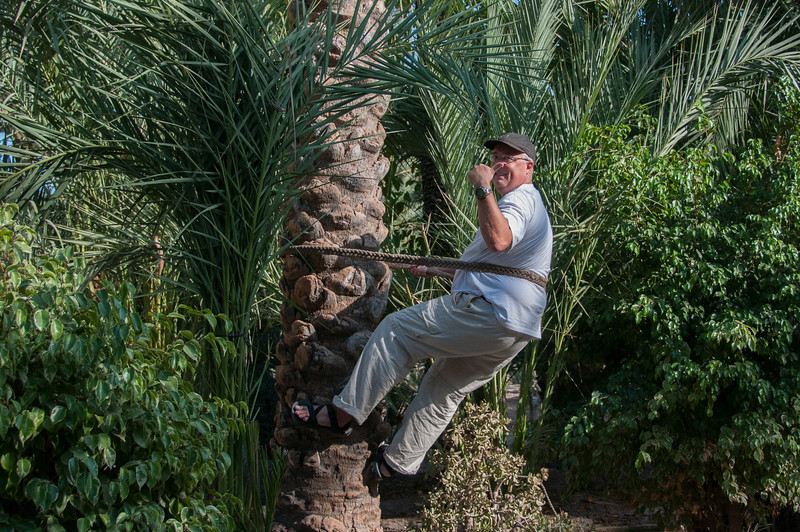 Trying to climb a palm tree in the Palmeral of Elche, Spain