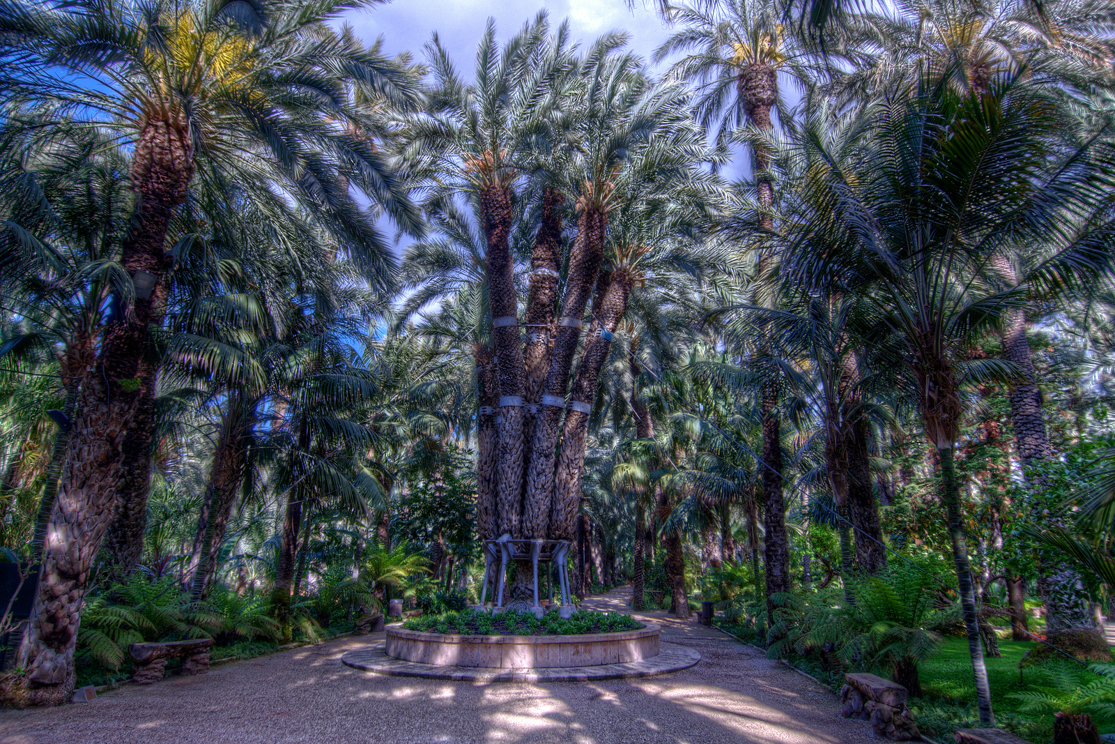 Palmeral of Elche UNESCO World Heritage Site, Spain