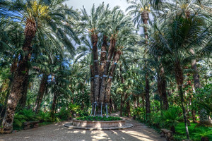 The Palm Forest of Elche, Spain