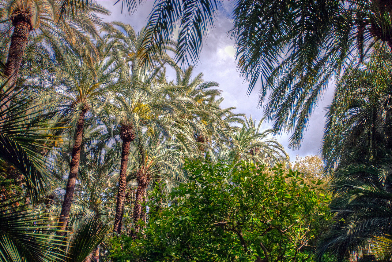 Palmeral of Elche (The Palm Grove of Elche) in Spain
