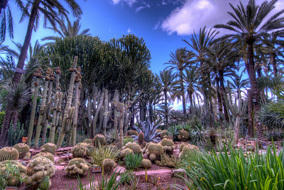 Cactus Garden in Elche, Spain