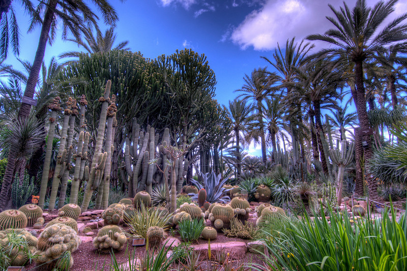 Cactus Garden in Elche, Spain