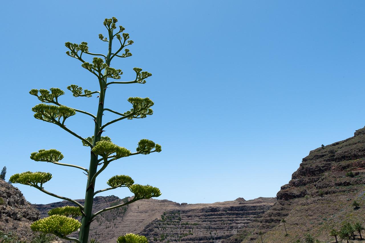 Close-up of a tree in La Gomera, Spain