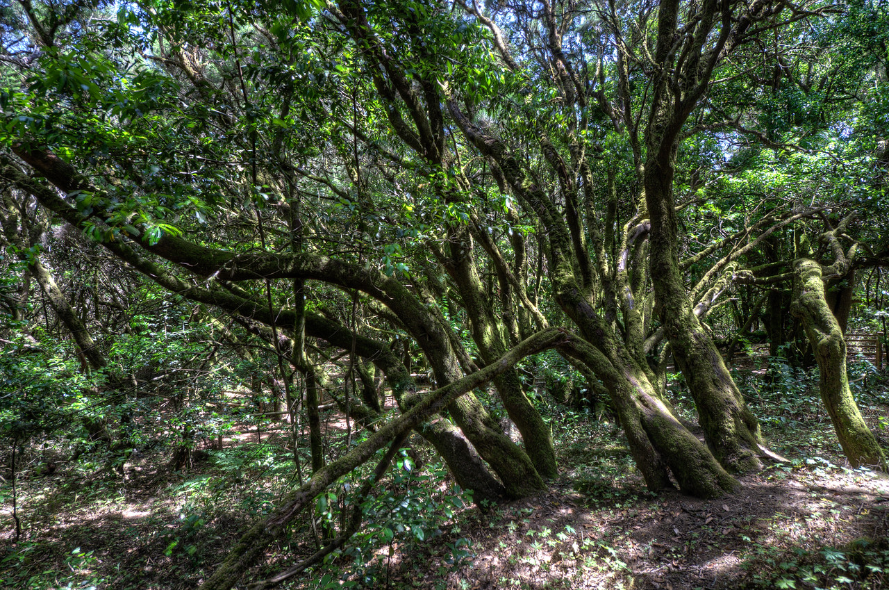 Inside Garajonay National Park in La Gomera, Spain