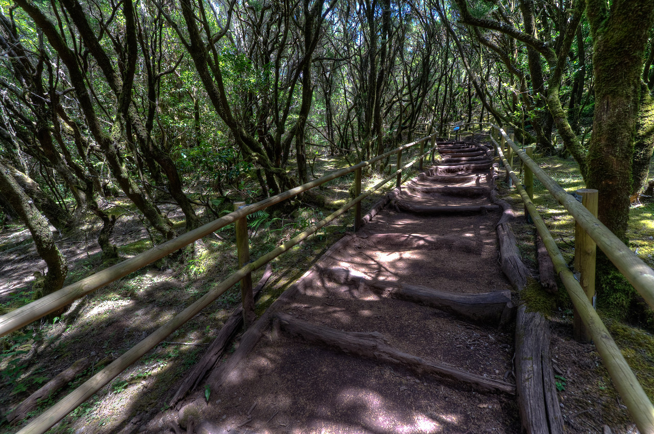Pathwalk in Garajonay National Park in La Gomera, Spain