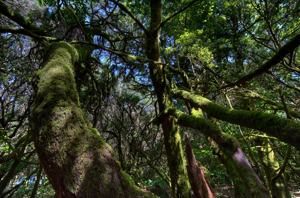 UNESCO World Heritage Site #152: Garajonay National Park
