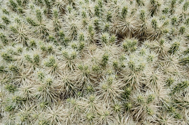 Detailed shot of plants in Cactus Garden, Lanzarote, Spain
