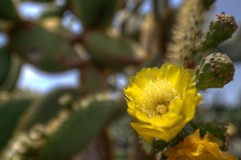 Close-up of a flower spotted in Lanzarote Island, Spain