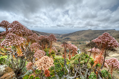 Colorful flora in the island of Lanzarote, Spain