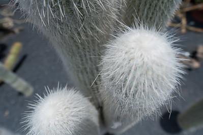 Close-up of a plant in Cactus Garden in Lanzarote, Spain