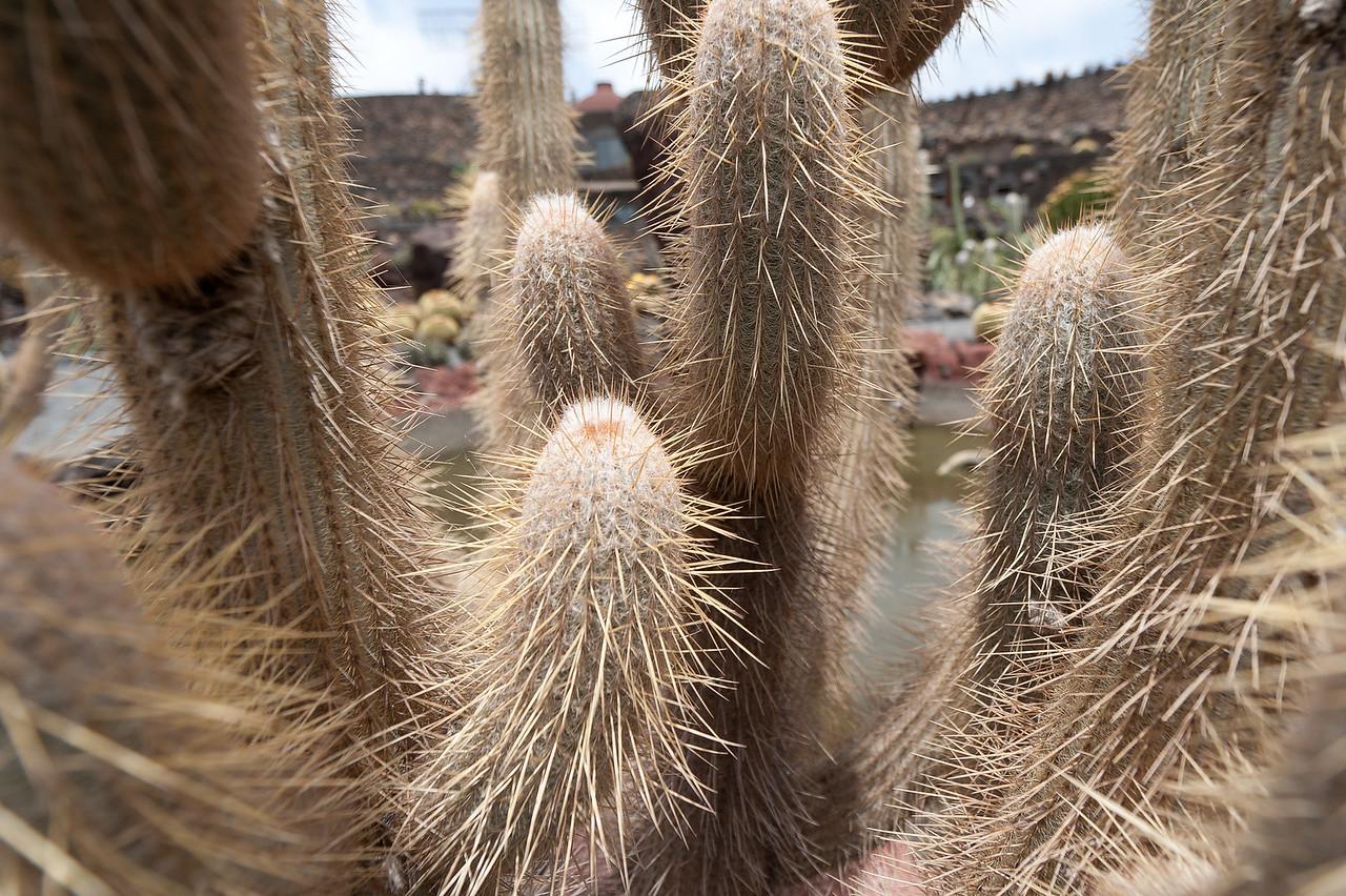 Macro shot of plant in Cactus Garden in Lanzarote, Spain
