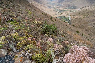 Beautiful flora in the island of Lanzarote, Spain