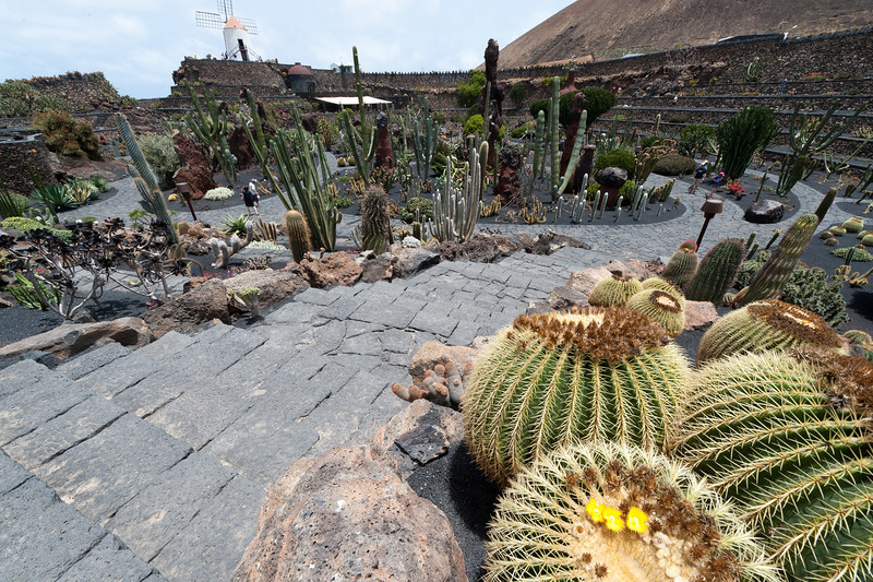 Cactus Garden in Lanzarote Island in Spain