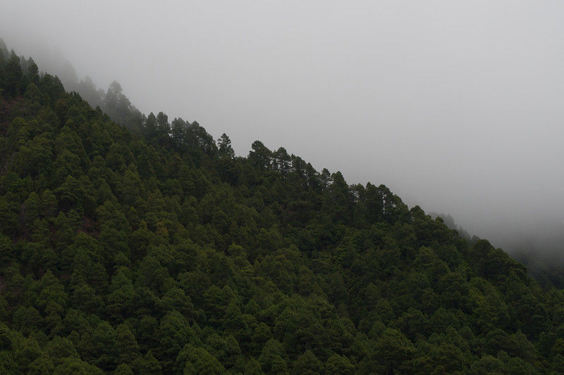 Thick canopy at La Palma, Spain
