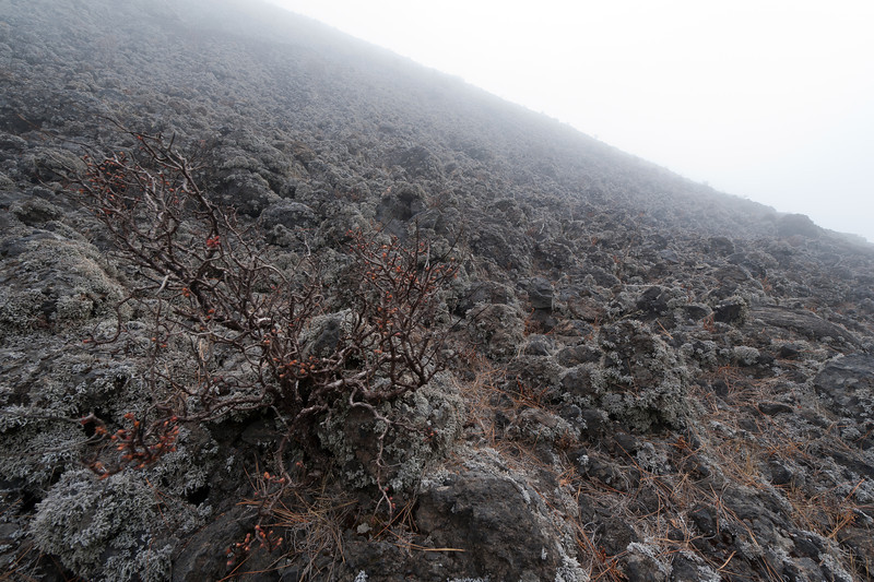 Rocky landscape at Caldera de Taburiente National Park - La Palma, Spain