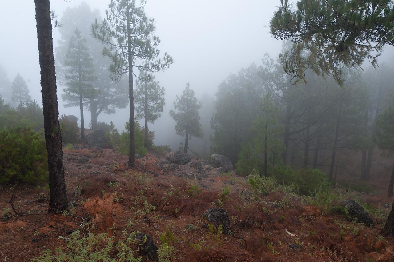 Thick fog at Caldera de Taburiente National Park in La Palma, Spain