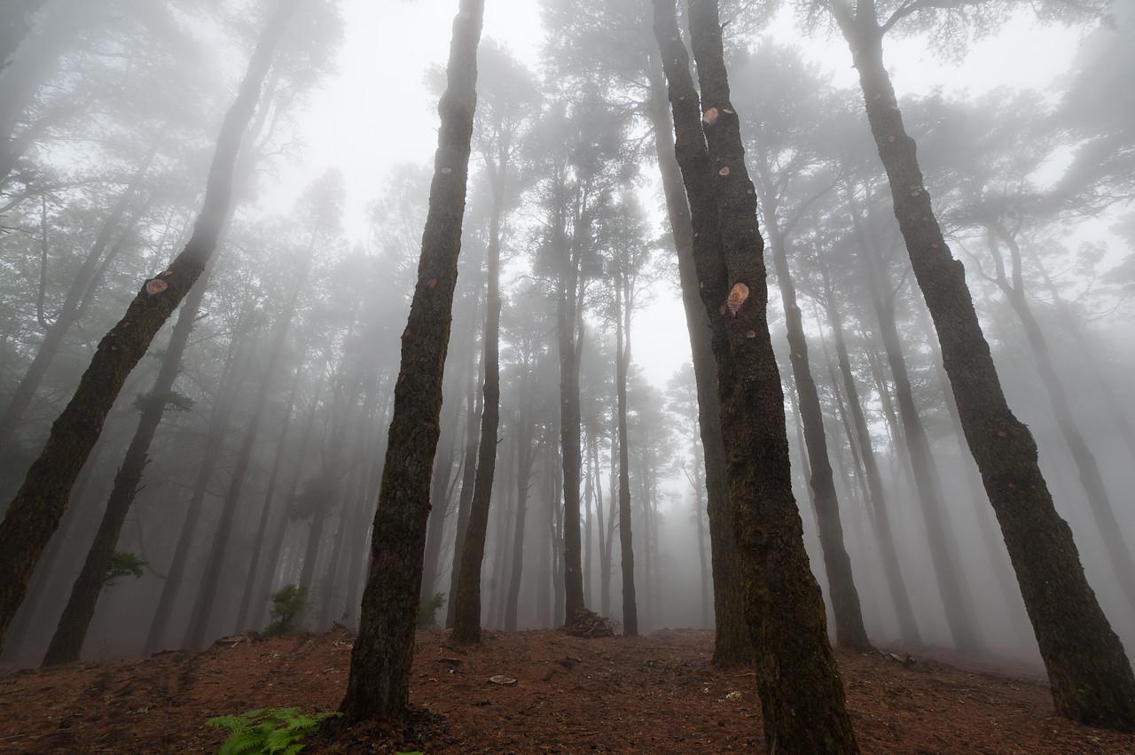 Thick fog covering Caldera de Taburiente National Park in La Palma, Spain