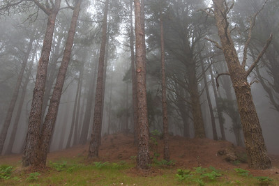 Fog covering Caldera de Taburiente National Park in La Palma, Spain