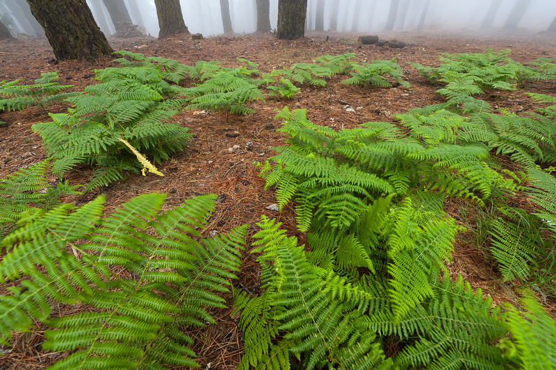 Fern plants at Caldera de Taburiente National Park in La Palma, Spain