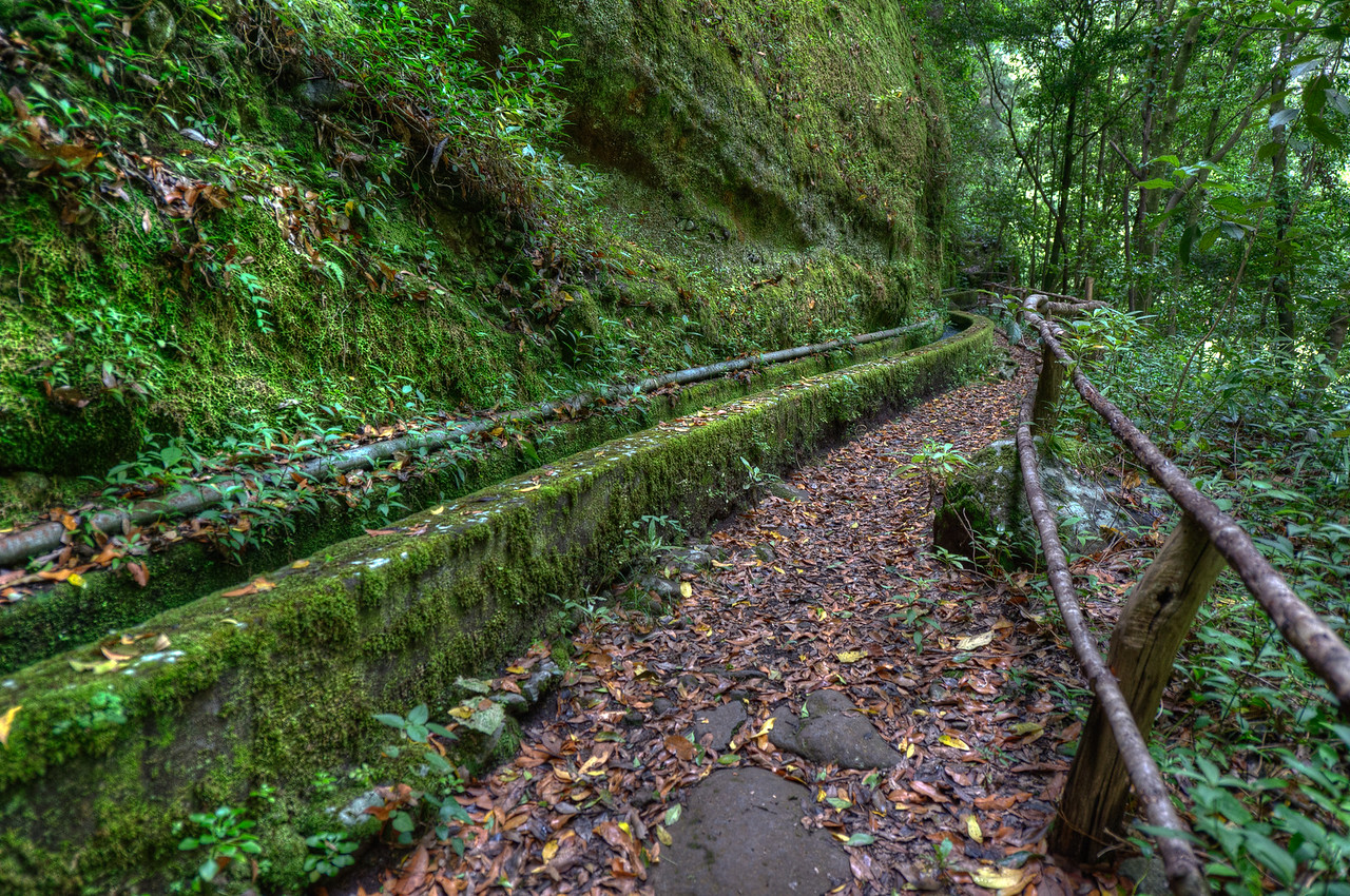 Hiking trail in La Palma, Spain